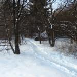 Im Schnee siehts zwischen den Wohnheimen ziemlich verwunschen aus...